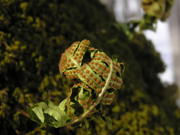 トガリネズミの画像 p1_1